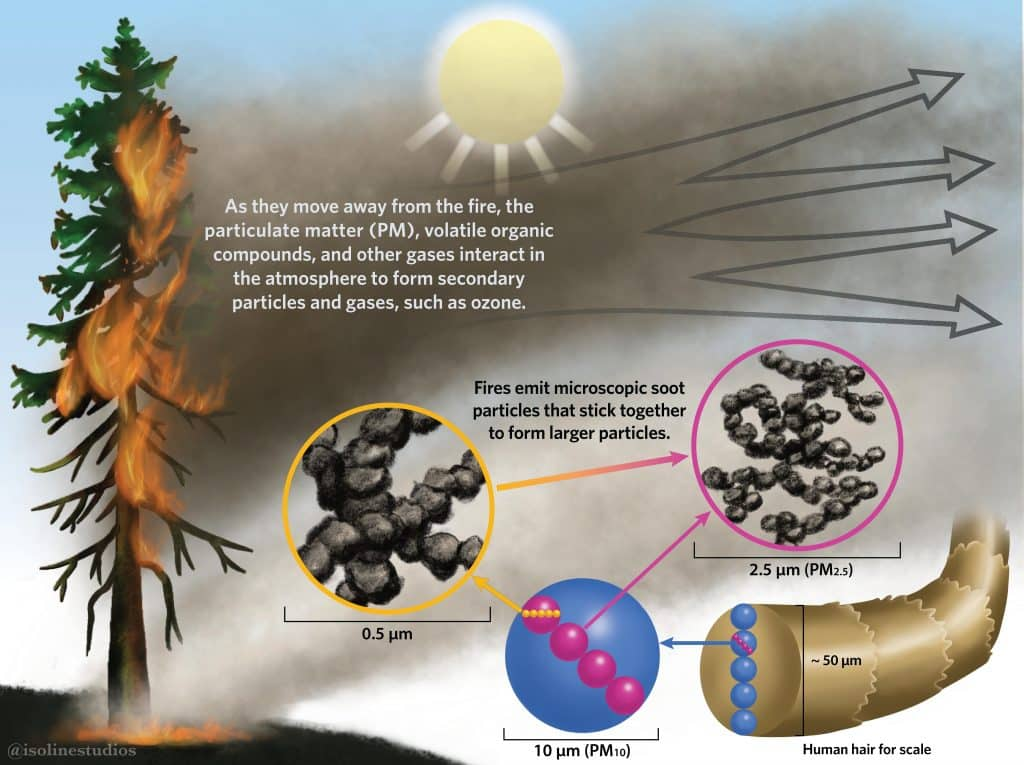 Forest fire particulates